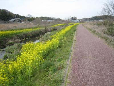 菜の花サイクリングロード