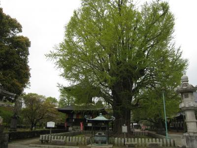 ばんな寺1
