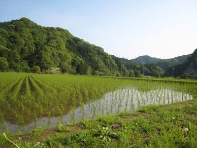 亀山湖11