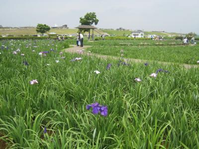 小岩菖蒲園2