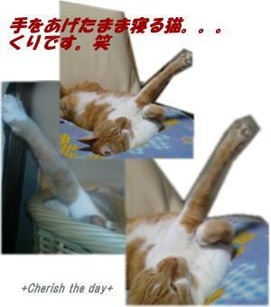 おやじ猫くりの寝姿