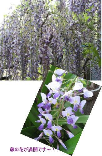 藤の花☆080426