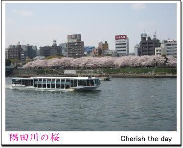 隅田川で花見散歩1