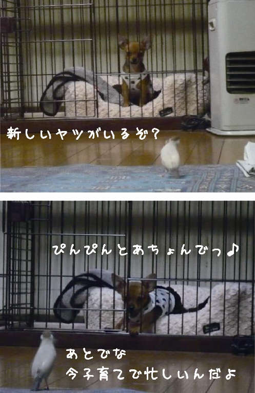 081217_きなあん・ぴんぴん