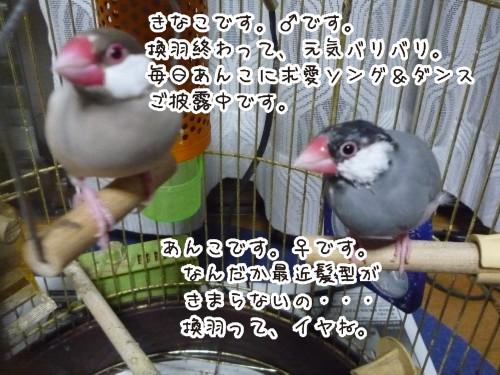 20090701_きなあん1