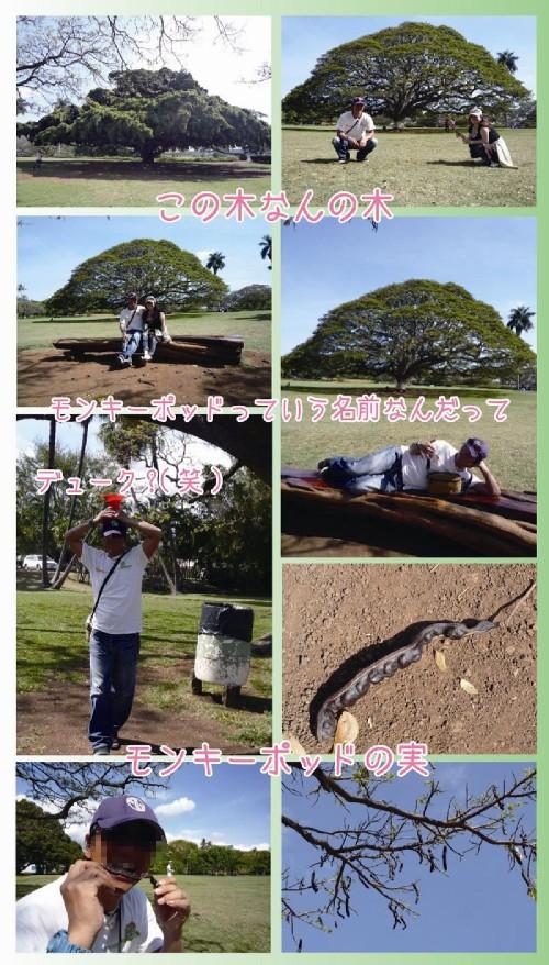 5日目_8この木なんの木