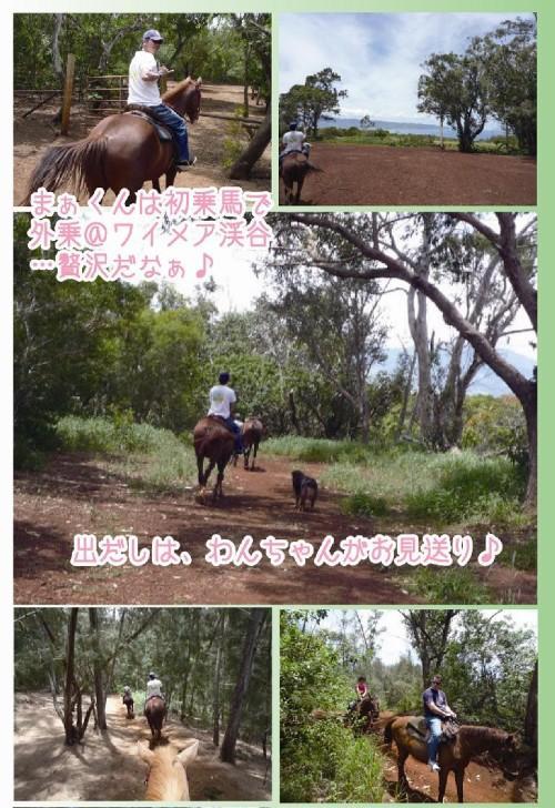 hawaii乗馬1