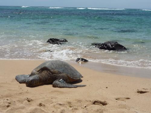 hawaii_lumix285.jpg