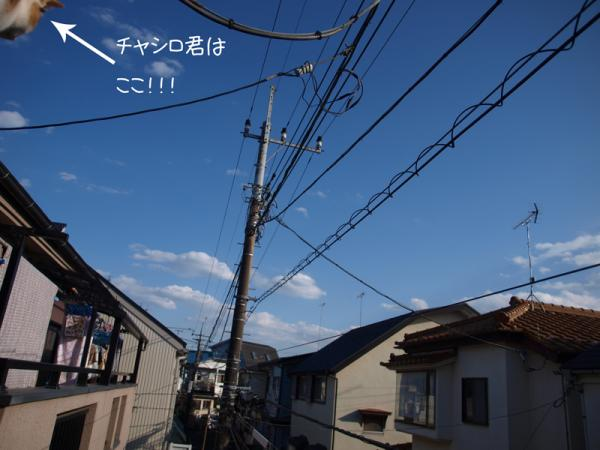 P2196254.jpg