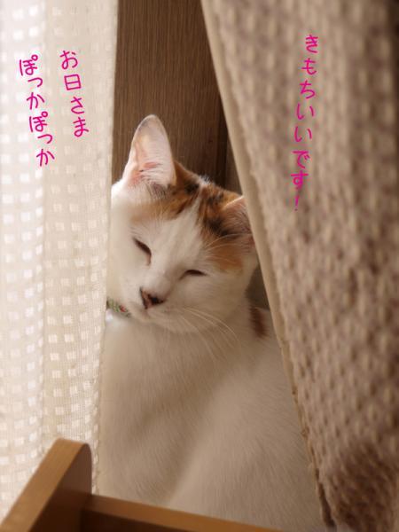 PA032861.jpg