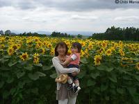 2007-0706himawari.jpg