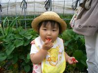 2007-0706ichigo1.jpg