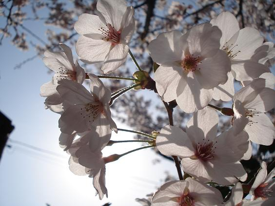 08桜エキサイト引越し