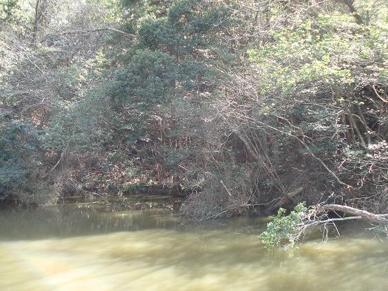 昼の山の池