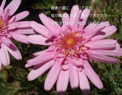 実家の花たち1