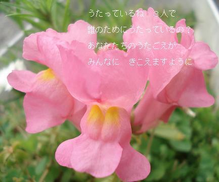 うたう花たち