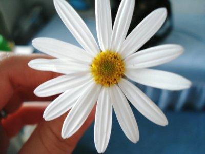 あめだまおじいさんの花