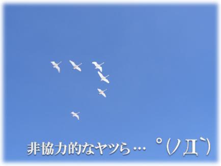 0811-G-05.jpg