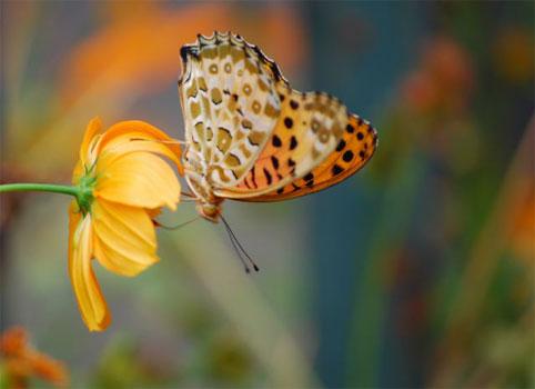 花と蝶0004