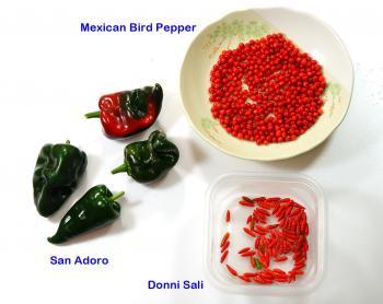 081022_peppers2.jpg