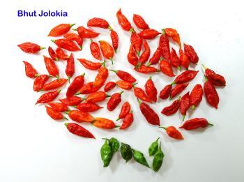 081022_peppers3.jpg