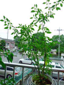 090706_chillipadi.jpg