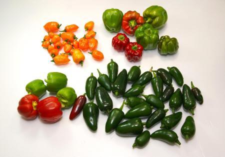 090801_peppers01.jpg