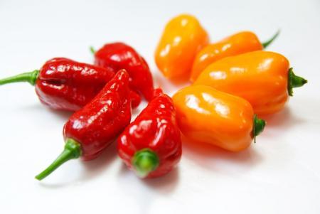 090801_peppers05.jpg