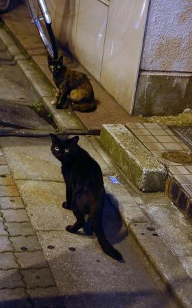 090803_cat.jpg