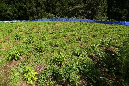 090803_peppers12.jpg