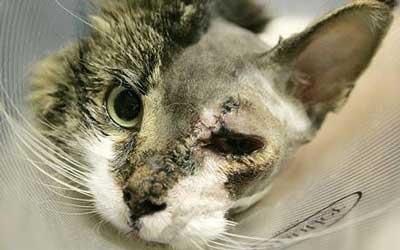 顔面火傷の猫