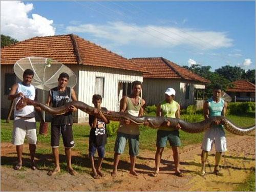 huge-anakonda