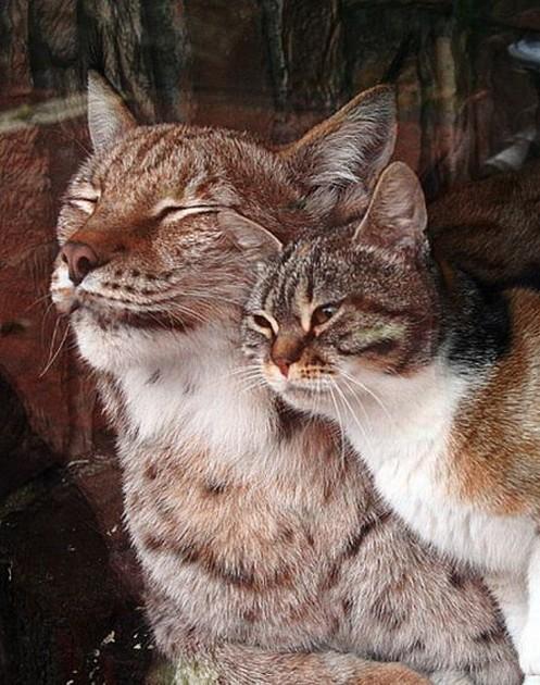 cats-photo01