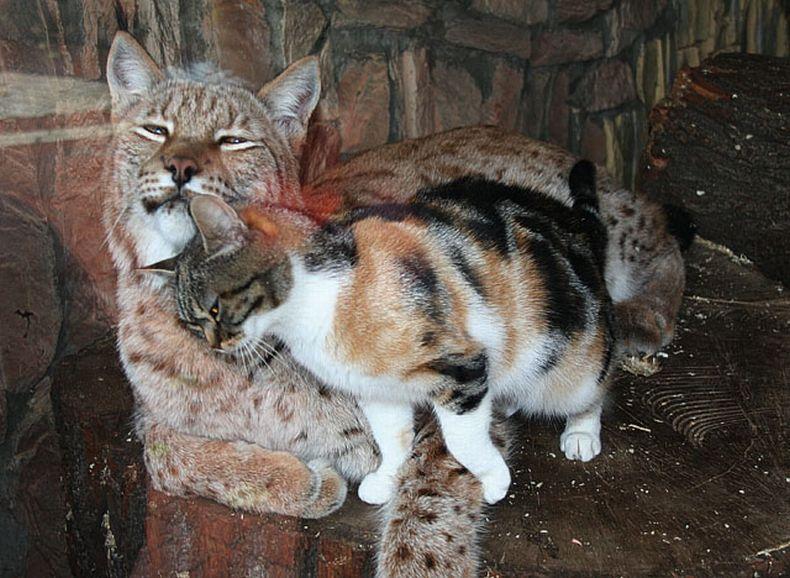 cats-photo02