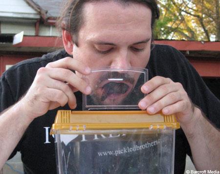 口の中にゴキブリ世界記録