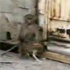 鶏をパクる猿