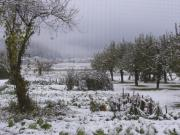 2005/11/19 初雪の朝