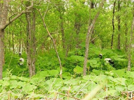 林のなかに・・・