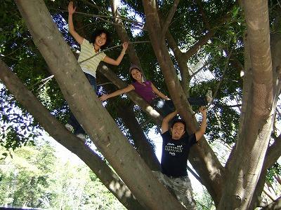 3人木登り