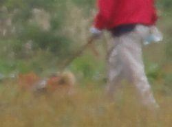 画像 098柴犬