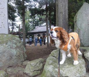 画像 097神社