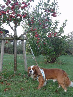画像 101ミニりんご