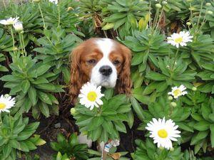 画像 097白い花