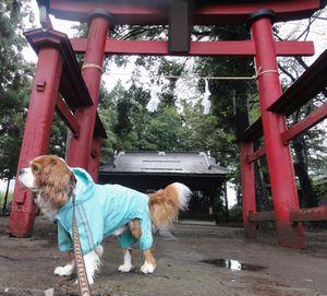画像 095神社