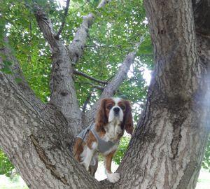 画像 101銀杏の木