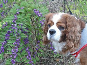 画像 097小紫