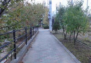 画像 105公園1