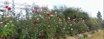 画像 113花壇