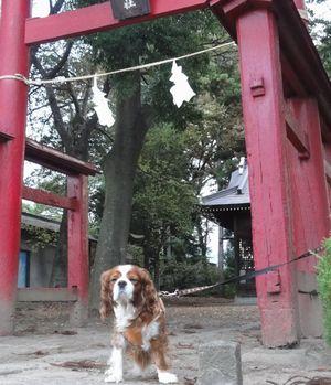 画像 107神社