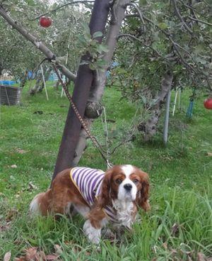 画像 105りんご畑
